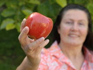 The fiber in apples makes them slow to digest, so you feel full longer. (©iStockphoto.com/Nikolay Mamuluke)
